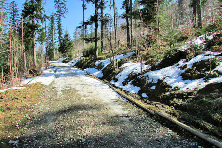 spacer ścieżką pod reglami